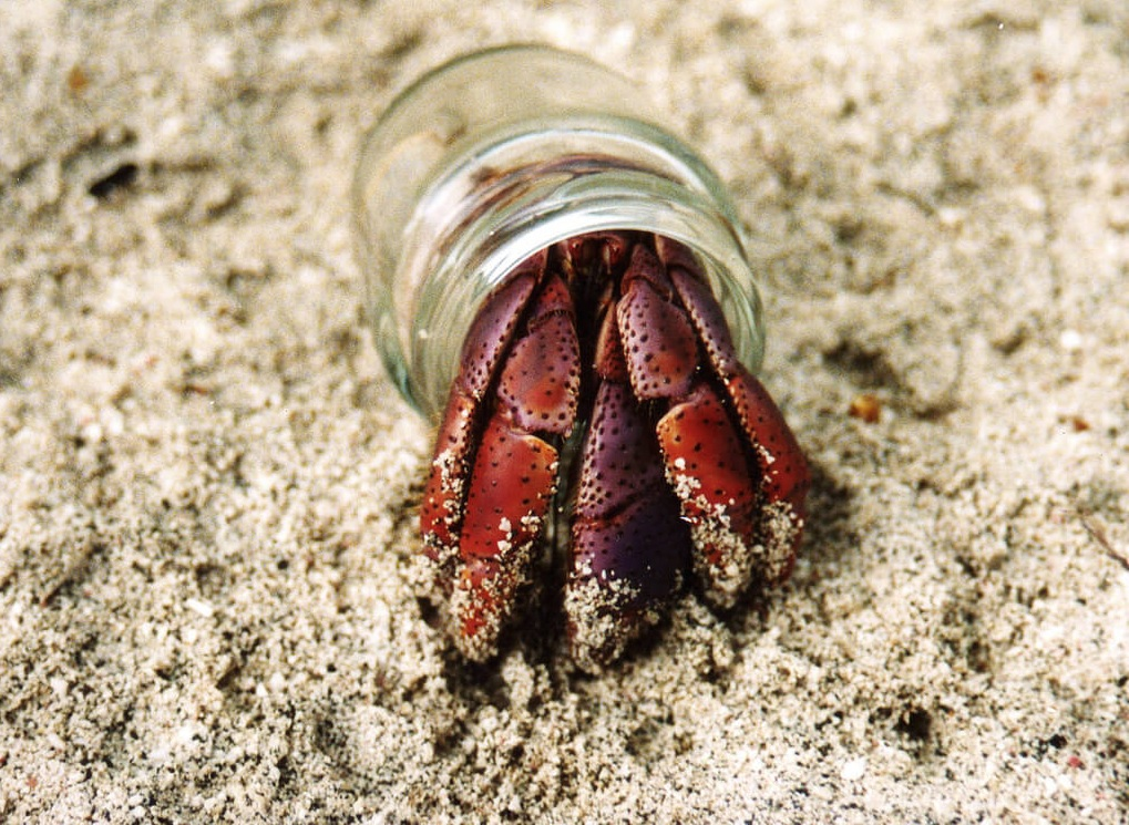 Substrate and Sand for Hermit Crab